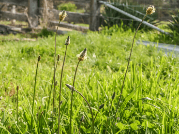 How To Treat Weeds In My Paddock