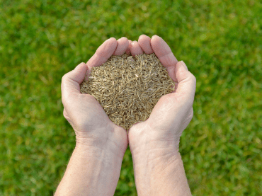 How To Seed Or Over-seed Grass