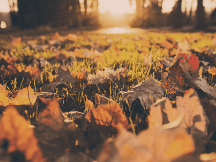 How To Renovate A Lawn In Autumn
