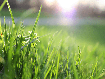 How To Give My Lawn The Correct Nutrition