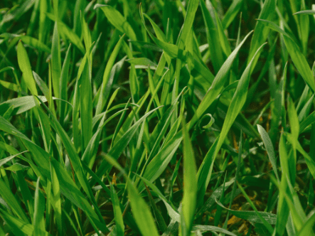 How To Slow Down Grass Growth