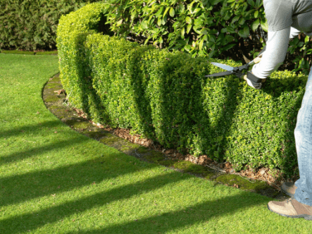 How To Control Weeds Around A Hedge