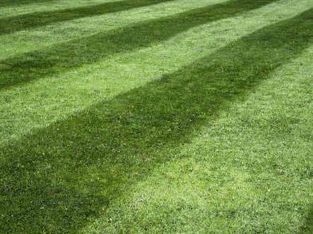 How To Get A Lawn Ready For An Event