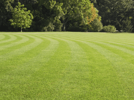 How To Get Stripes On A Lawn