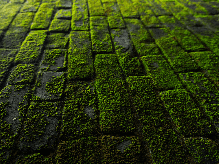 How To Remove Moss On Hard Surfaces