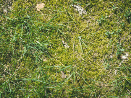 How To Remove Moss From A Lawn
