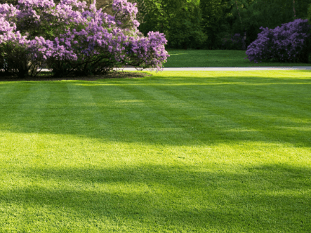 How to seed and overseed a lawn