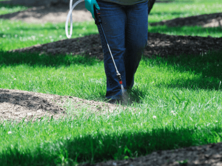 How To Remove Lawn Weeds Using Chemicals