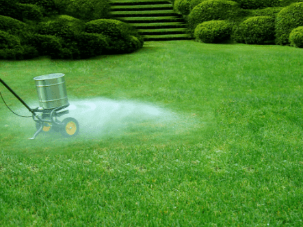 How To Fertilise Your Lawn In Spring