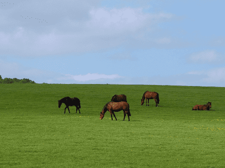 How To Fertilise A Paddock In Spring