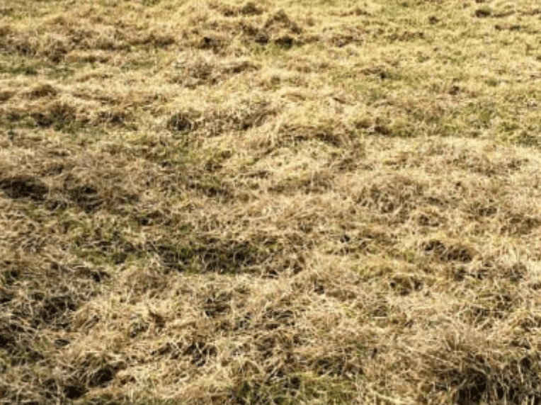 How To Remove Thatch From A Paddock