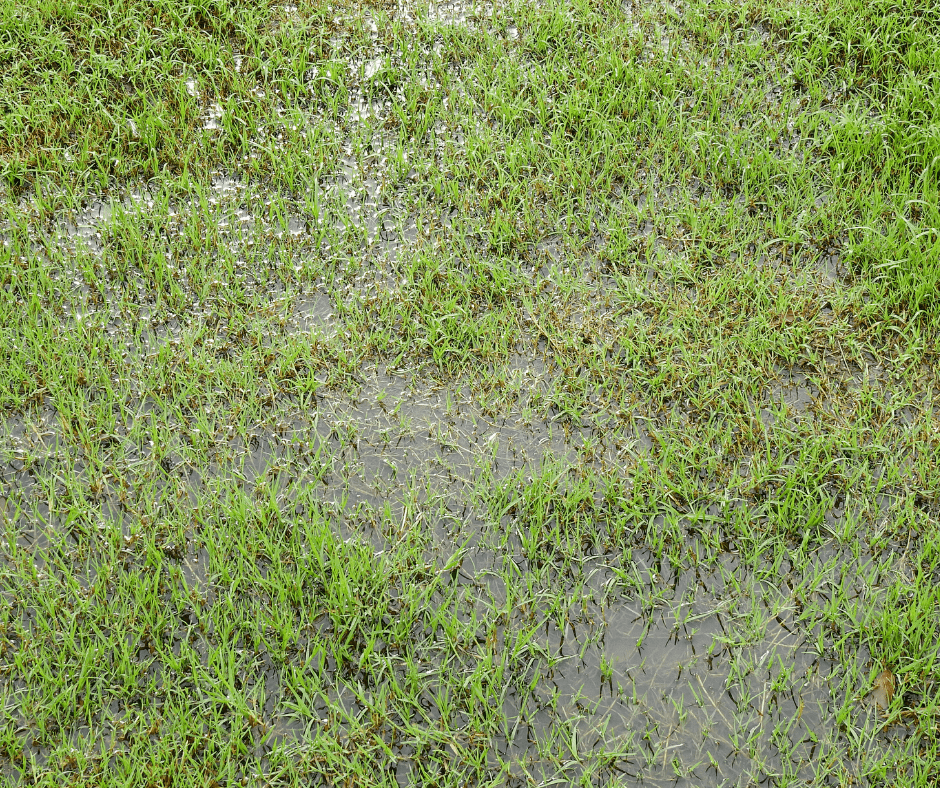 Recover Your Lawn From Waterlogging