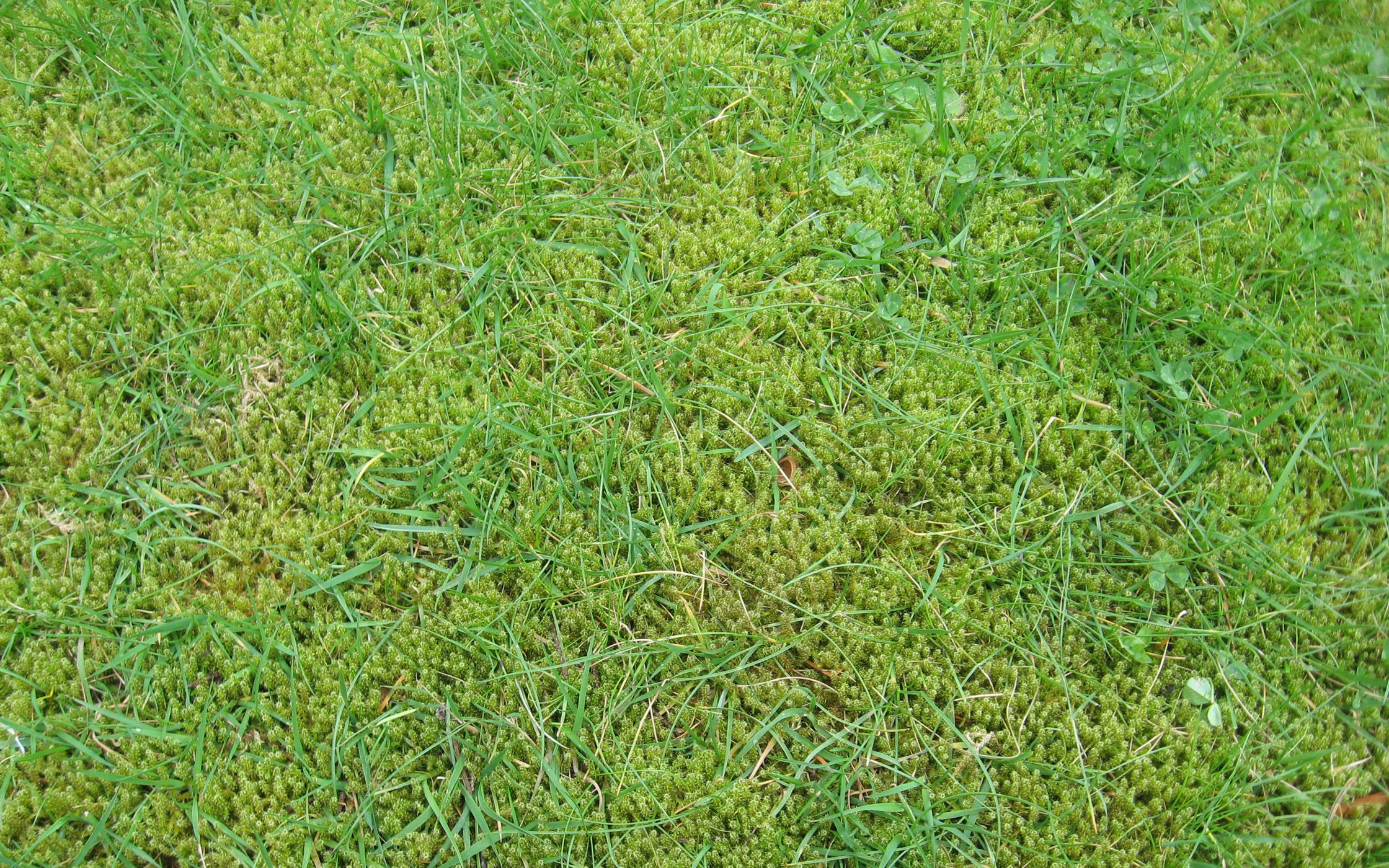 Top Tips for Moss Removal