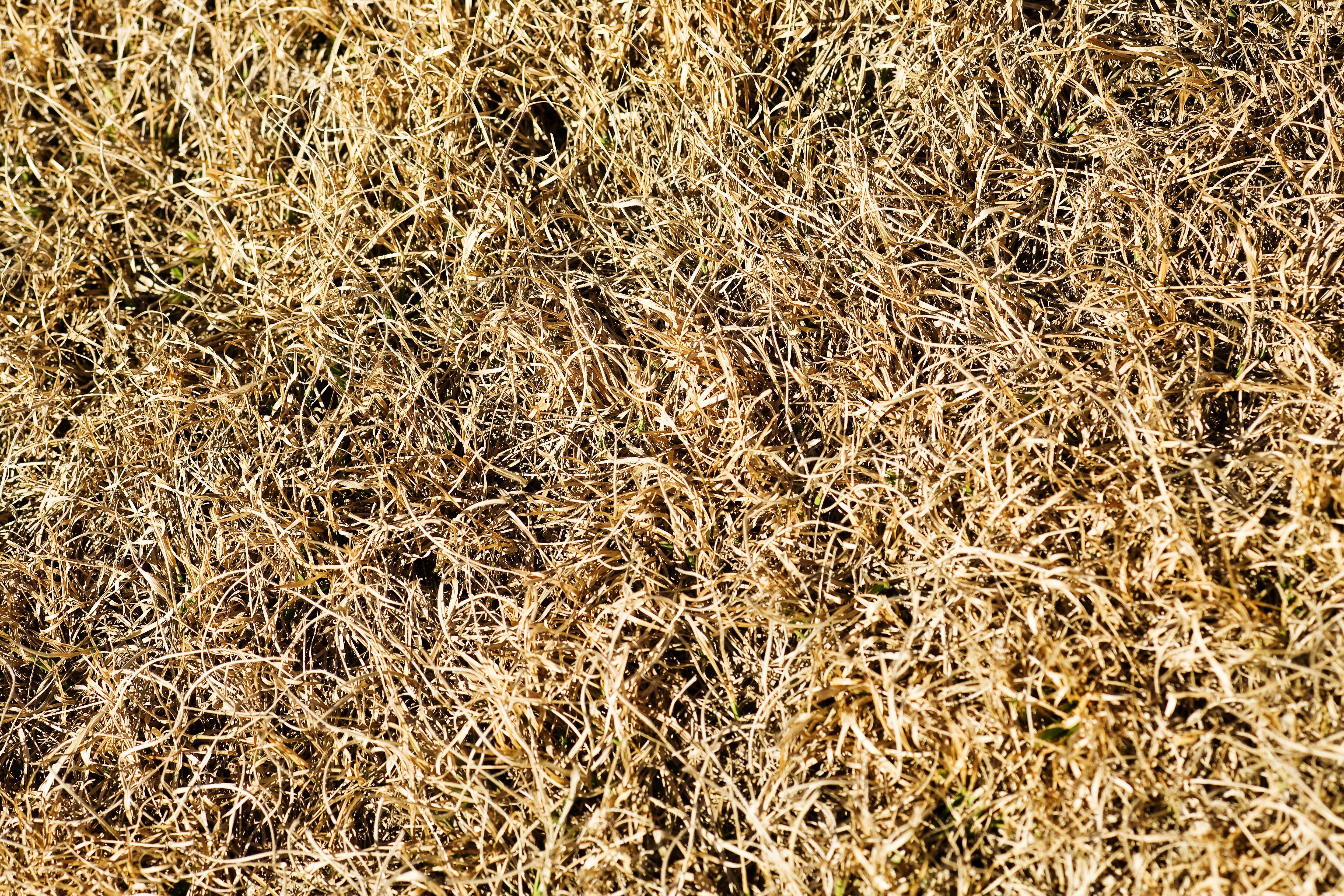 Lawn drought? Don't panic!