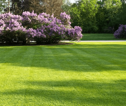 For Lawns