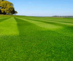 Sports Turf & Lawn Pests