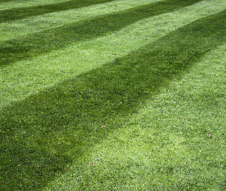 Lawns & Amenity Turf