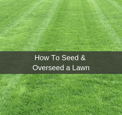 How to seed or overseed your lawn