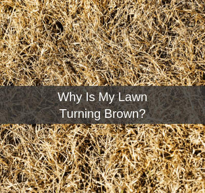 Why Is My Lawn Turning Brown?
