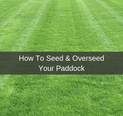 How to seed or overseed your paddock
