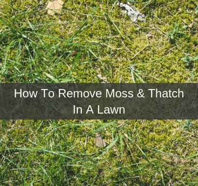 How To Remove Moss & Thatch In My Lawn
