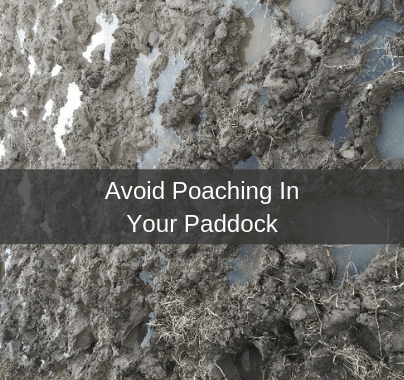 Avoid Poaching in Paddocks