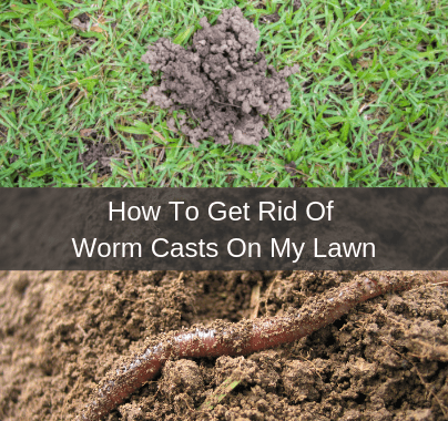 How to get rid of worm casts on my lawn