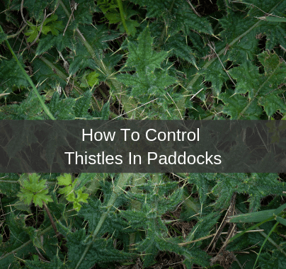How To Control Thistles In A Paddock