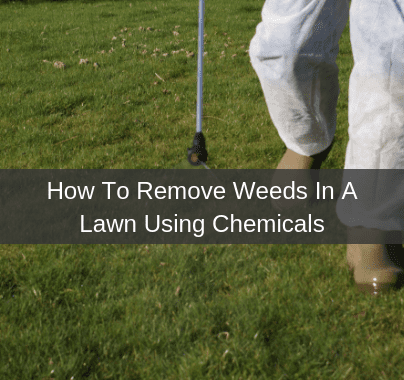How To Remove Weeds In My Lawn Using Chemicals