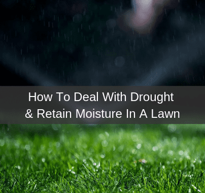 How to deal with drought & retain moisture in a lawn