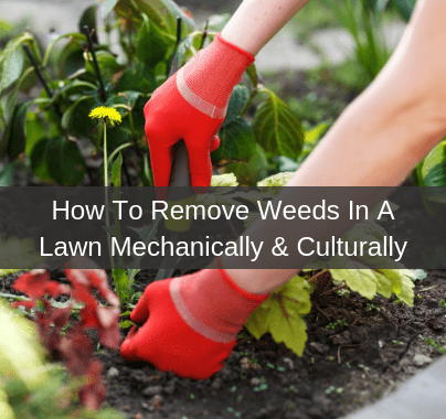 How To Remove Weeds In My Lawn Mechanically or Culturally