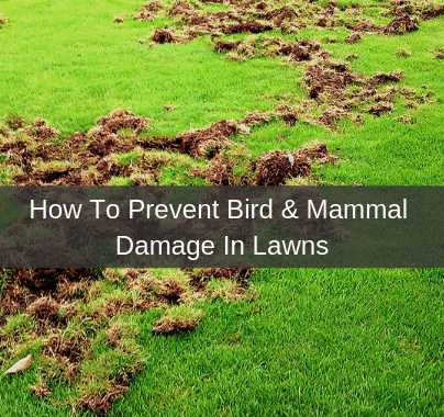How to prevent  bird & mammal damage in lawns