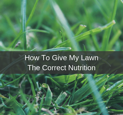 Give My Lawn The Correct Nutrition