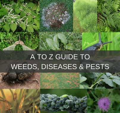 A to Z Weed, Diseases & Pests Guide