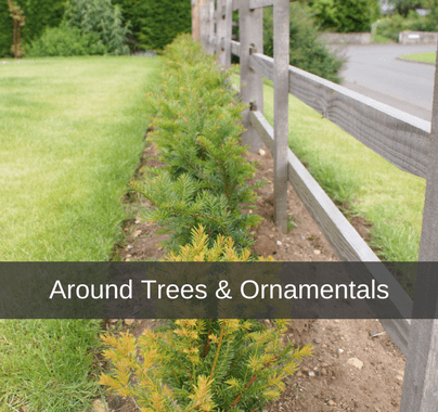 Around Trees & Ornamentals