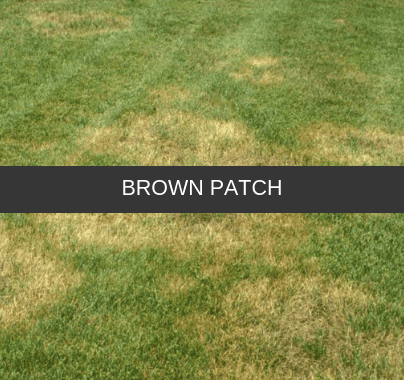 Brown Patch Control