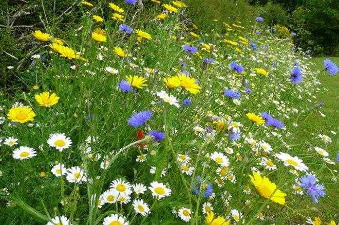 100% Native Wild Flower Seed Mix 1kg