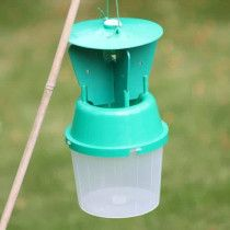 Chafer beetle garden trap
