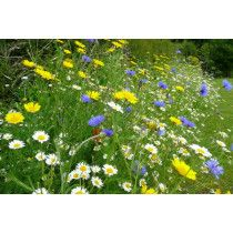 100% Native Wild Flower Seed Mix 1kg