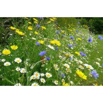 100% Wild Flower Seed 100g