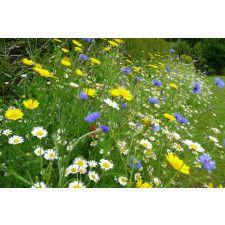 100% Wild Flower Seed Mix 100g