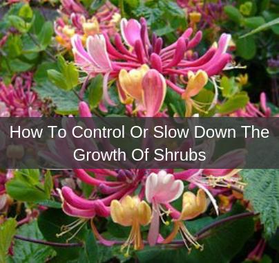 Shrub Growth Control