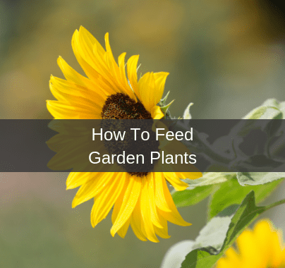 How To Feed A Garden Plant