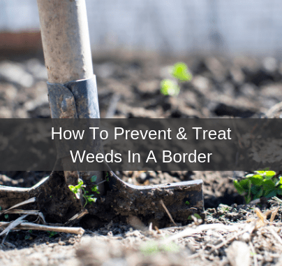 How To Prevent and Treat Weeds In A Border