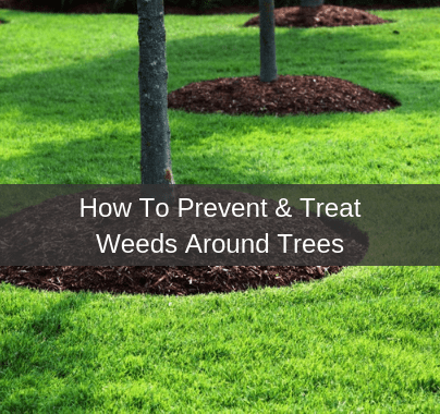 How To Prevent and Treat Weeds Around Trees