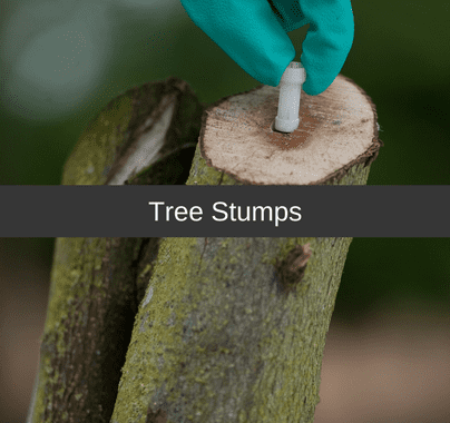 Tree Stumps Control