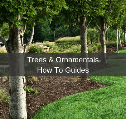 Trees, Shrubs & Ornamentals How To Guides
